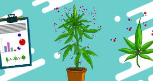 2 Azioni cannabis da comprare nel 2021