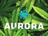 Azioni Aurora Cannabis saliranno?